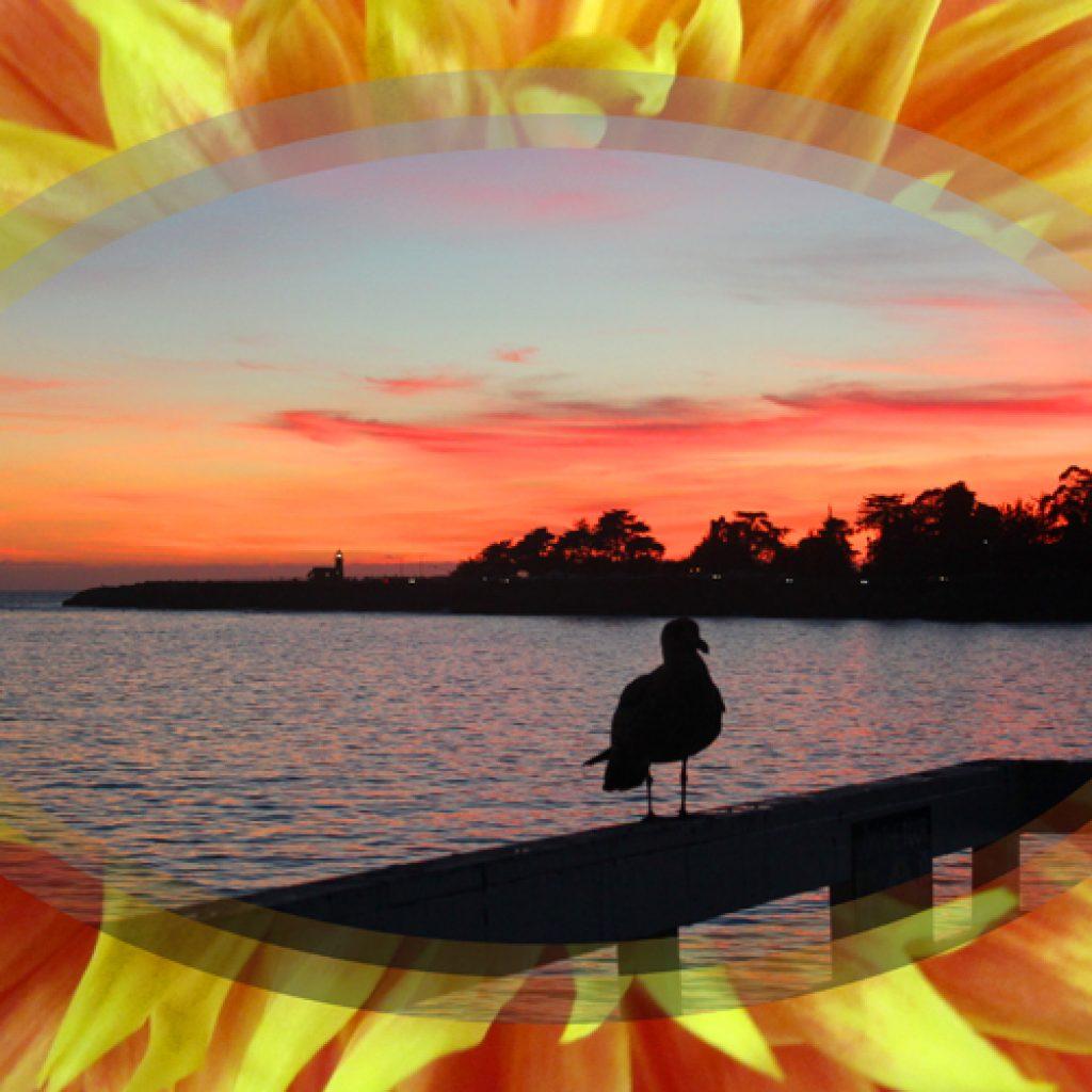 Dahlia Pier at Sunset