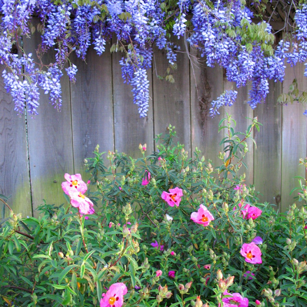 Fence + Flowers