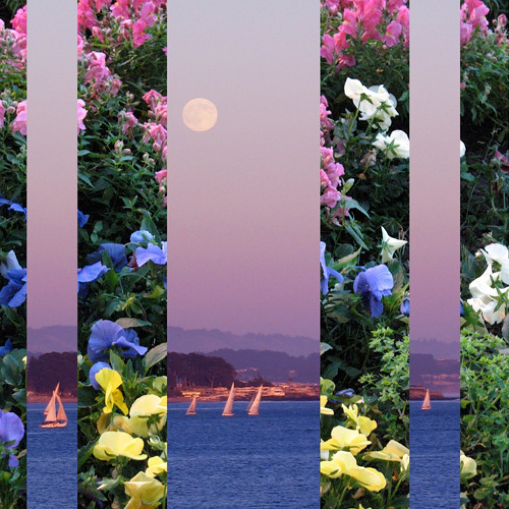 Flowery Moonlit Sailboats