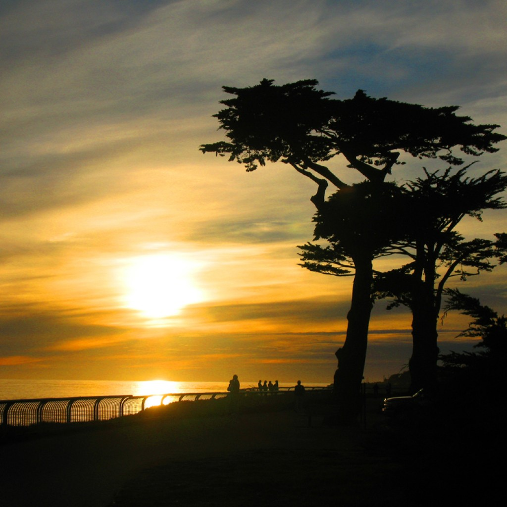 West Cliff Trees at Sunset