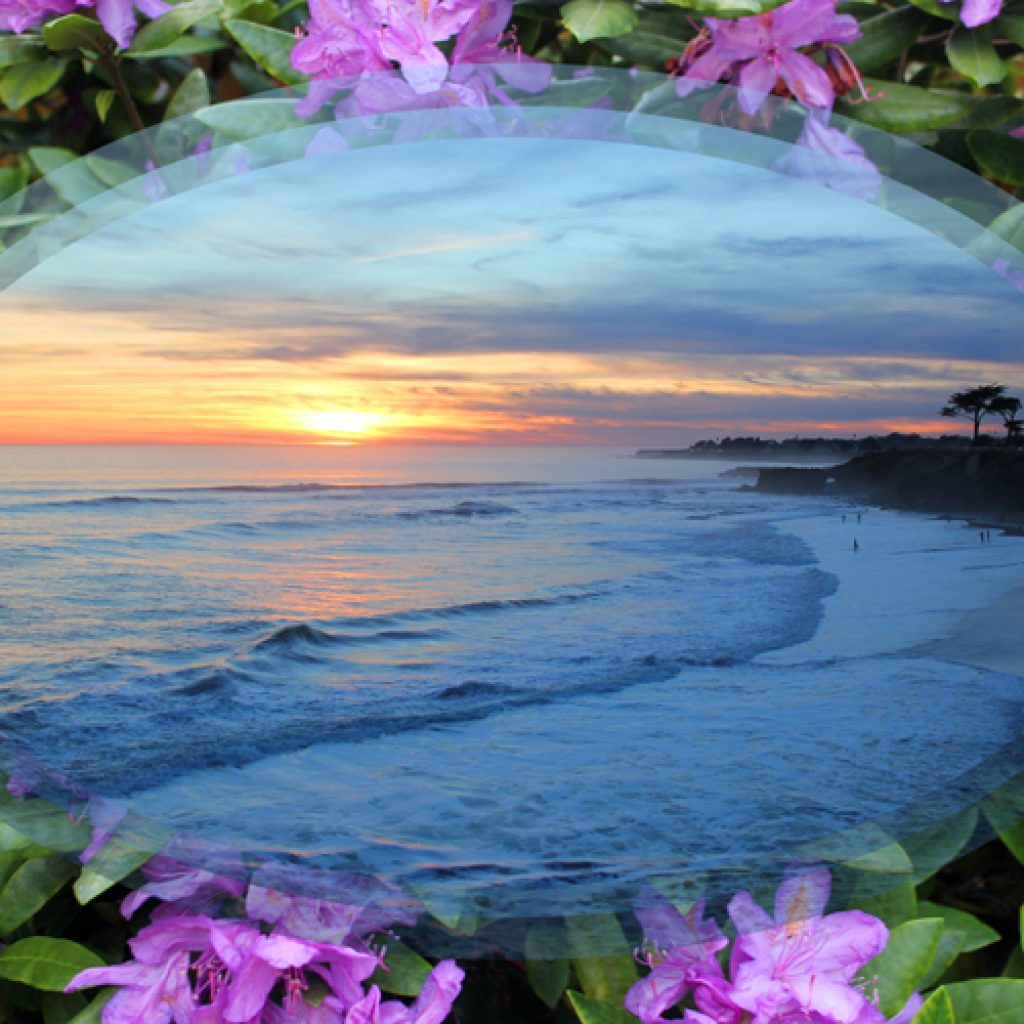 Blue Ocean Sunset in Purple Flowers
