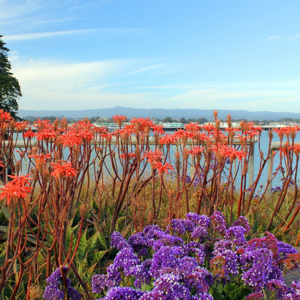 West Cliff Flowers