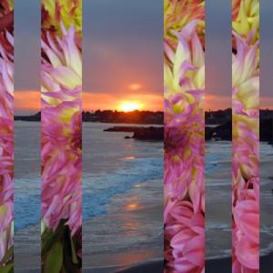 Dahlia Sunset 400 H Pixels