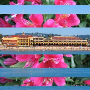 Springtime Casino 400 H Pixels