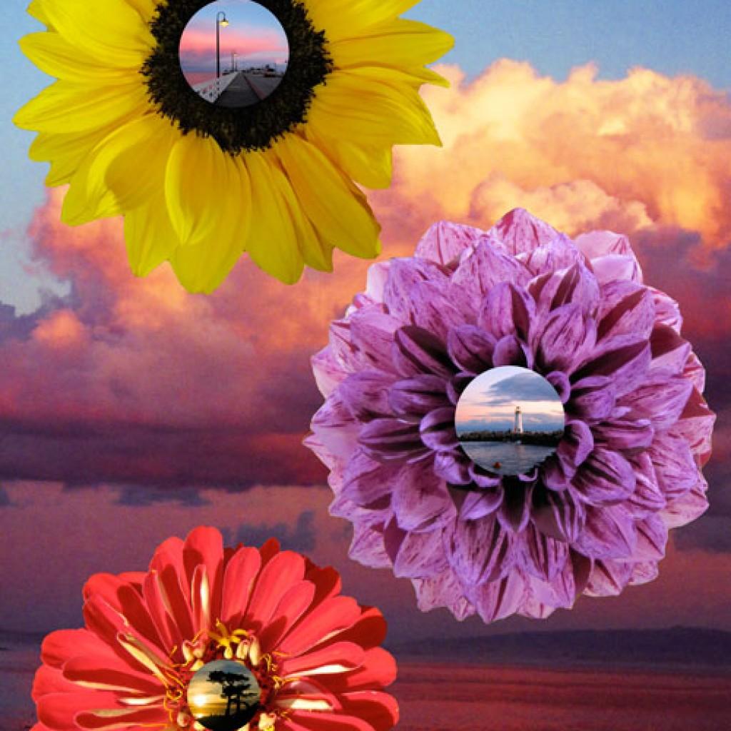 Oceanic Flower Scenes