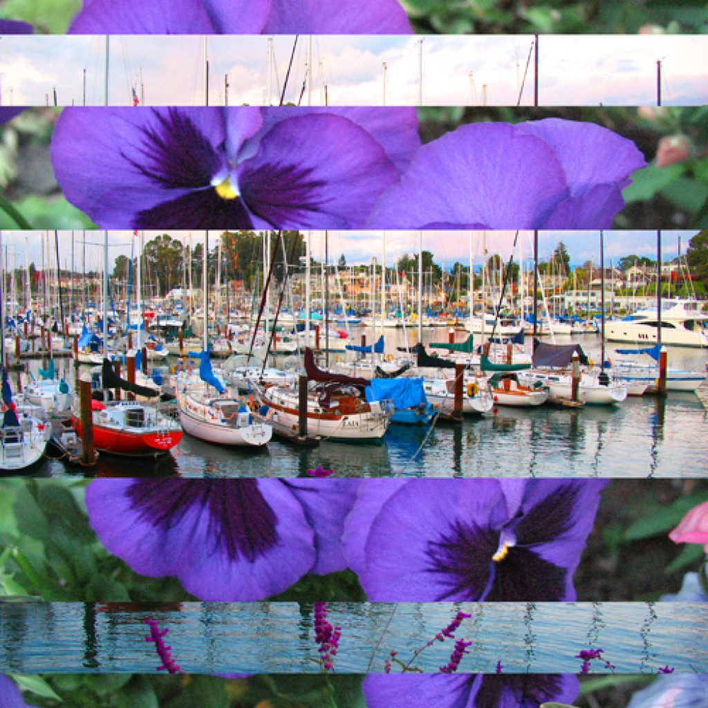 Purple Flower Boats