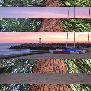 Redwood Tree Lighthouse at Sunset