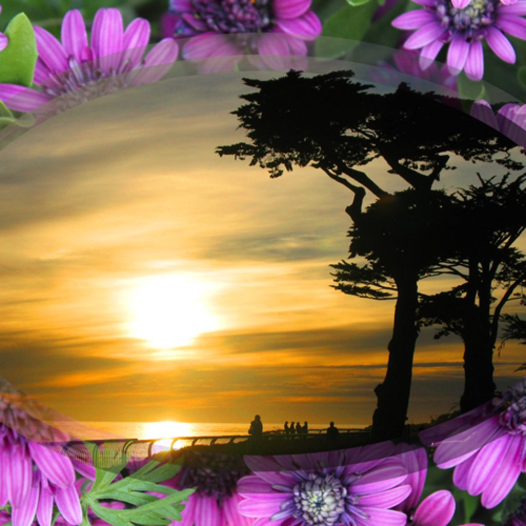 Purple Flowered Sunset on W. Cliff